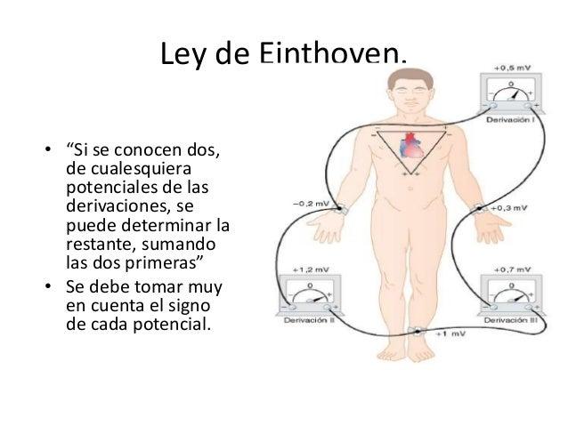 Resultado de imagen para el triángulo de Einthoven en el tórax.