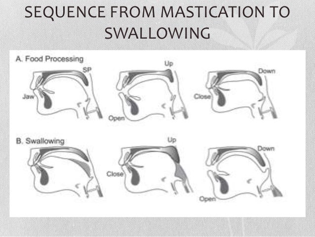 Swallow Breathing 15