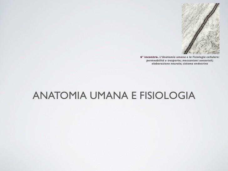 6° incontro. L'Anatomia umana e la Fisiologia cellulare:                     permeabilità e trasporto; meccanismi sensoria...
