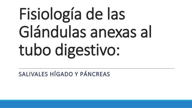Fisiología de las Glándulas anexas al tubo digestivo: SALIVALES HÍGADO Y PÁNCREAS