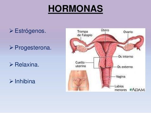 Fisiología aparato reproductor femenino