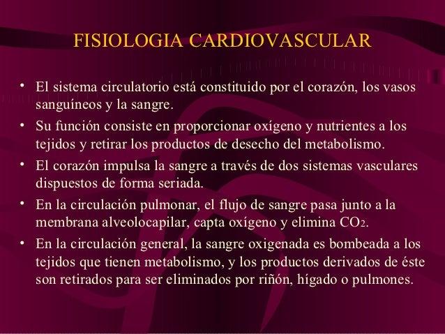 Fisiología cardiovascular en el ser humano