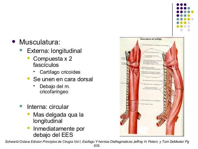 Fisiología de faringe y esófago