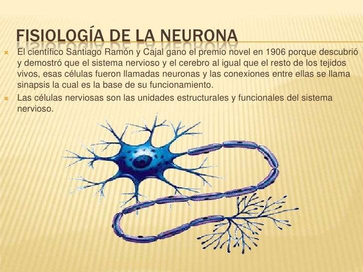 Fisiología de la neurona<br />El científico Santiago Ramón y Cajal gano el premio novel en 1906 porque descubrió y demostr...