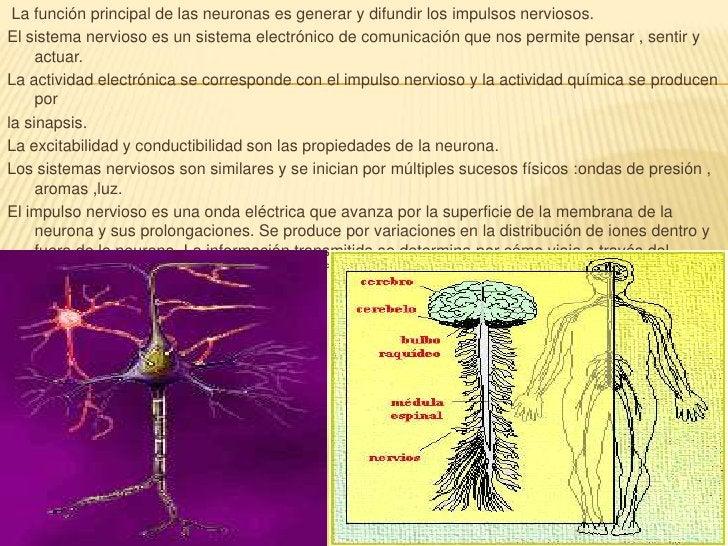 La función principal de las neuronas es generar y difundir los impulsos nerviosos. <br />El sistema nervioso es un sistema...