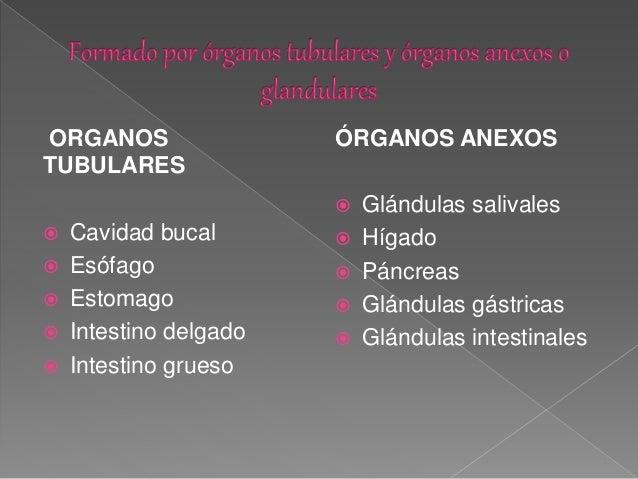 Fisiología del aparato digestivo Slide 2