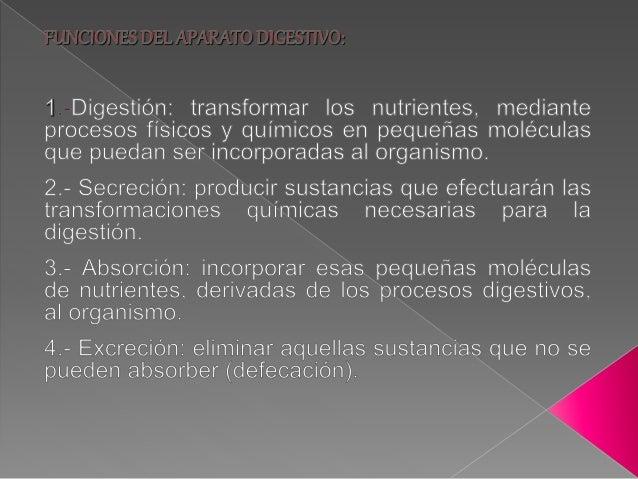 Fisiología del aparato digestivo Slide 3
