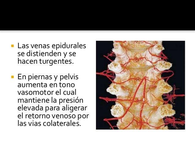  Las venas epidurales se distienden y se hacen turgentes.  En piernas y pelvis aumenta en tono vasomotor el cual mantien...