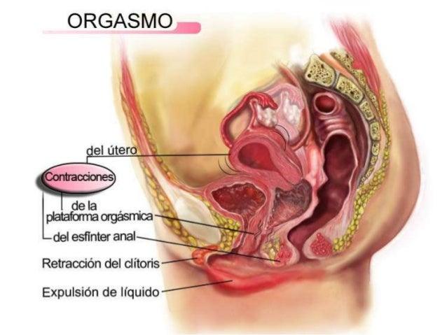 Fisiología del orgasmo femenino