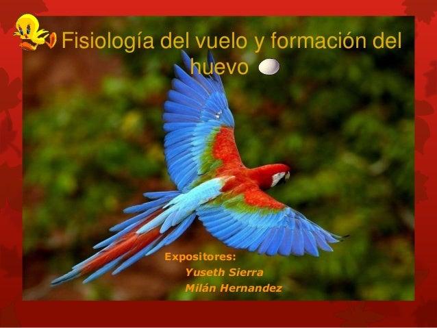 Fisiología del vuelo y formación del huevo Expositores: Yuseth Sierra Milán Hernandez