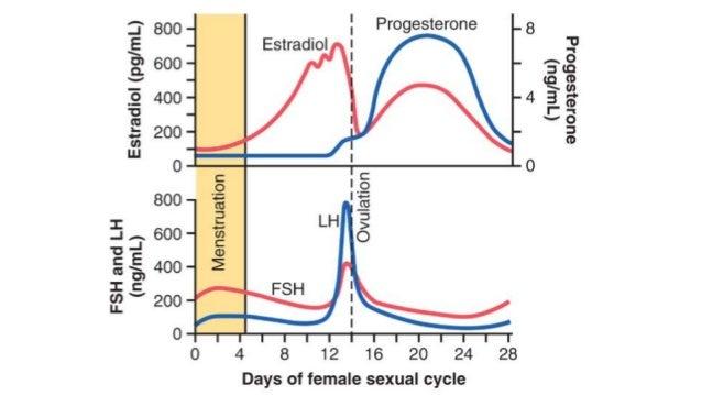 Fisiología femenina antes del embarazo & hormonas femeninas
