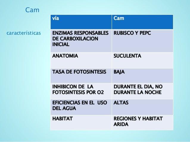 Fisiología vegetal-1 plantas cam