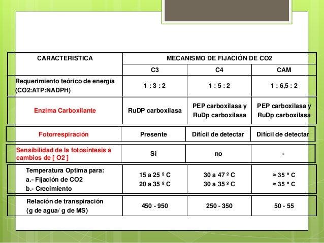 d51c7d0952e Fotosintesis c3 c4 y cam ppt