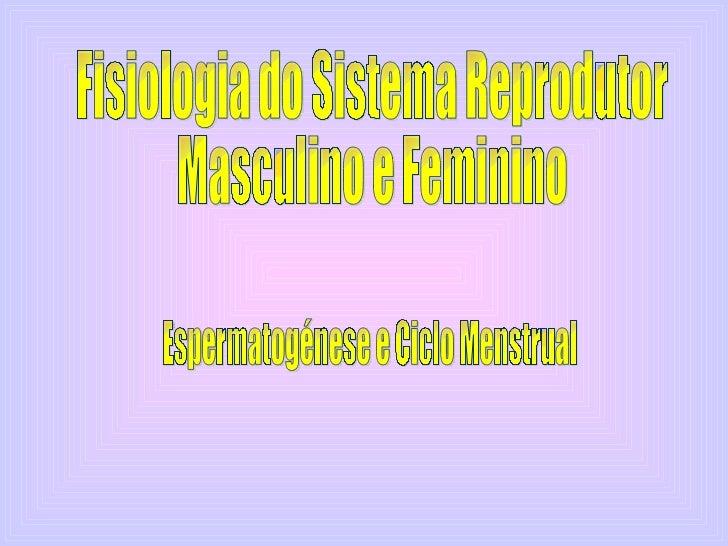 Fisiologia do Sistema Reprodutor  Masculino e Feminino  Espermatogénese e Ciclo Menstrual