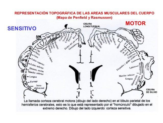 Fisiologia Sistema Motor