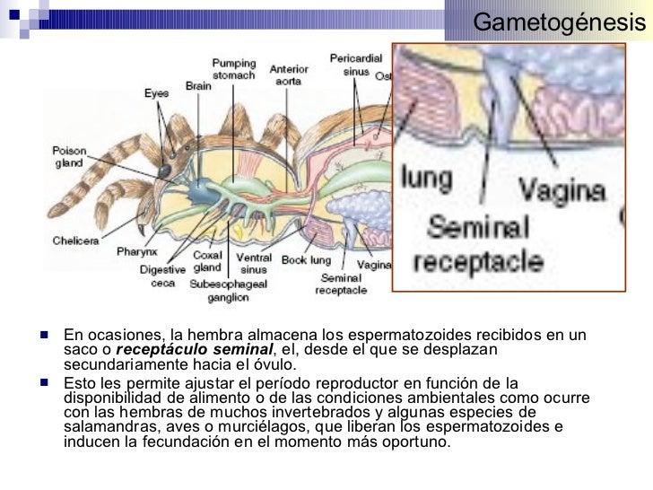 Fisiologia Animal: Reproduccion II