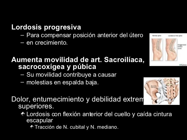 <ul><li>Lordosis progresiva </li></ul><ul><ul><li>Para compensar posición anterior del útero  </li></ul></ul><ul><ul><li>e...