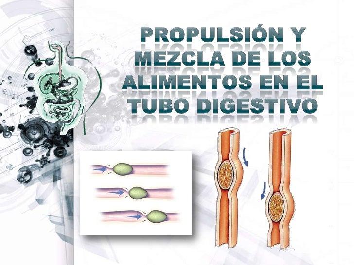 PROPULSIÓN Y MEZCLA DE LOS ALIMENTOS EN EL TUBO DIGESTIVO<br />