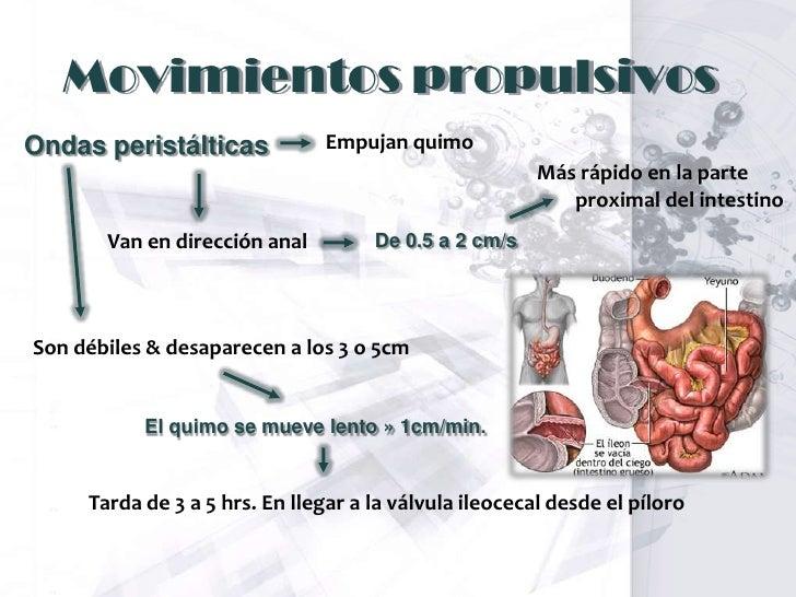 Fisiologia Propulsion De Los Alimentos