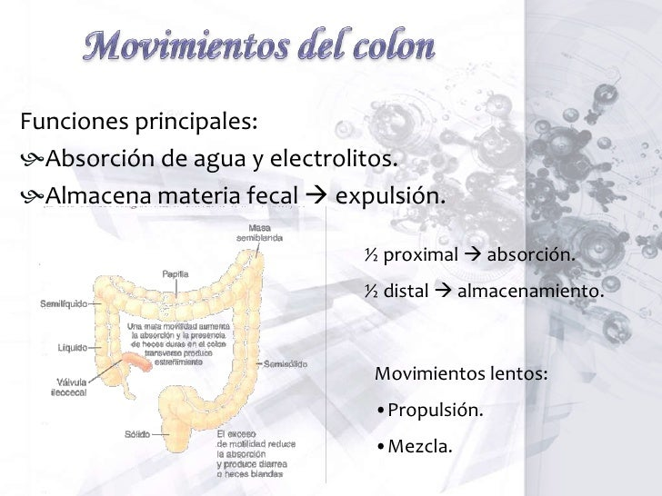Retroalimentación hormonal del duodeno inhibe el vaciamiento gástrico<br />Los estímulos para la producción de estas hormo...