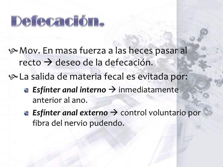 Contracciones de mezcla<br />Contracciones de segmentación<br />Quimo<br />Contracciones concéntricas localizadas<br />Dis...