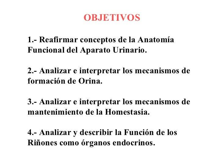 Fisiologia Renal Slide 2