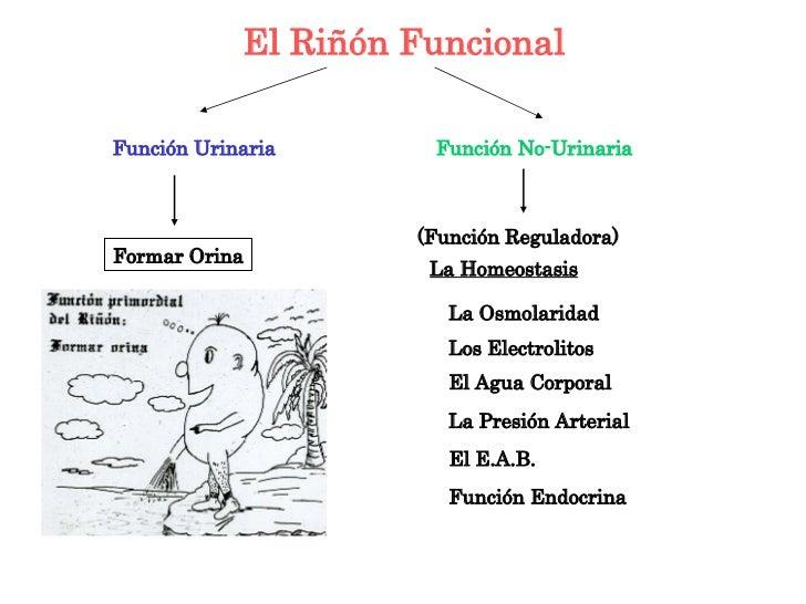 Fisiologia Renal Slide 3