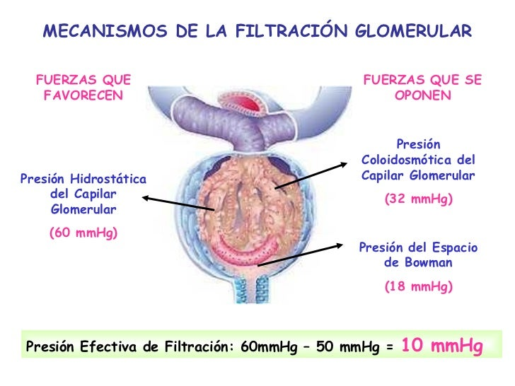 Fisiologia Renal