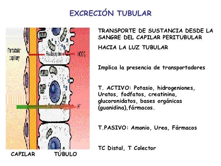 luz tubular