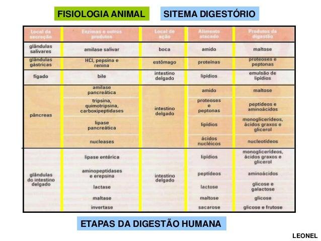 FISIOLOGIA ANIMAL  SITEMA DIGESTÓRIO SITEMA DIGESTIVO  ETAPAS DA DIGESTÃO HUMANA LEONEL