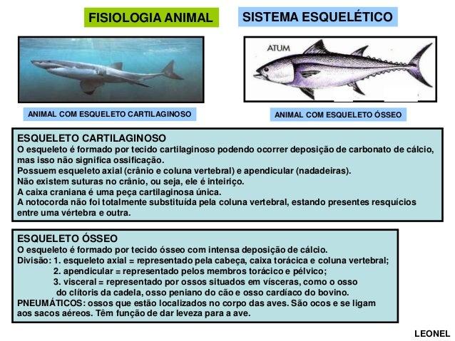 FISIOLOGIA ANIMAL  ANIMAL COM ESQUELETO CARTILAGINOSO  SISTEMA ESQUELÉTICO  ANIMAL COM ESQUELETO ÓSSEO  ESQUELETO CARTILAG...