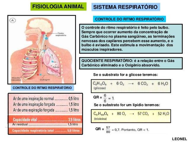 FISIOLOGIA ANIMAL  SISTEMA RESPIRATÓRIO CONTROLE DO RITMO RESPIRATÓRIO  O controle do ritmo respiratório é feito pelo bulb...