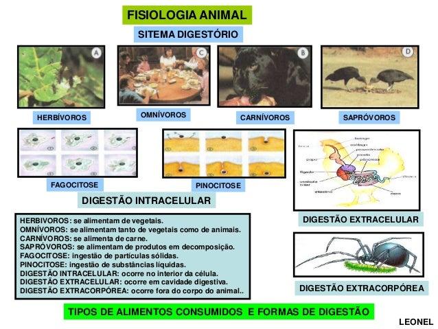 Fisiologia animal comparada    (versão para aula) Slide 3