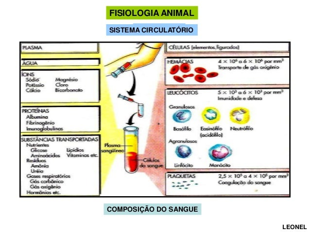 FISIOLOGIA ANIMAL CIRCULAÇÃO SISTEMA CIRCULATÓRIO  COMPOSIÇÃO DO SANGUE LEONEL