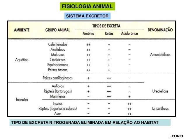 FISIOLOGIA ANIMAL SISTEMA EXCRETOR  TIPO DE EXCRETA NITROGENADA ELIMINADA EM RELAÇÃO AO HABITAT LEONEL