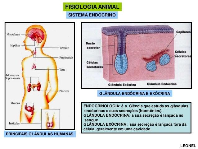 FISIOLOGIA ANIMAL SISTEMA ENDÓCRINO  GLÂNDULA ENDÓCRINA E EXÓCRINA ENDOCRINOLOGIA: é a Ciência que estuda as glândulas end...