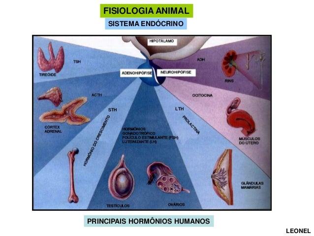 FISIOLOGIA ANIMAL SISTEMA ENDÓCRINO  STH  LTH  PRINCIPAIS HORMÔNIOS HUMANOS LEONEL