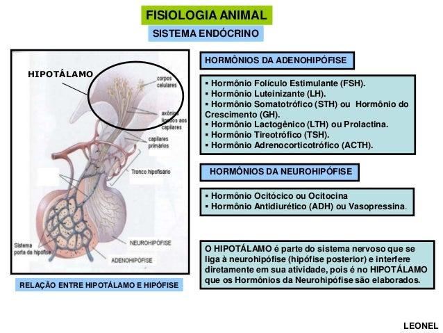 FISIOLOGIA ANIMAL SISTEMA ENDÓCRINO HORMÔNIOS DA ADENOHIPÓFISE HIPOTÁLAMO   Hormônio Folículo Estimulante (FSH).  Hormôn...