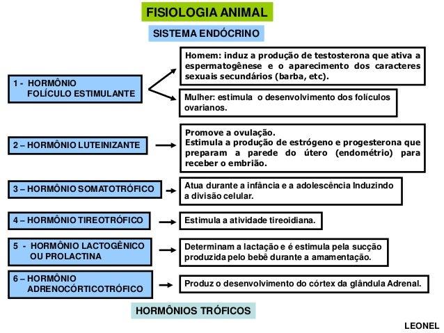 FISIOLOGIA ANIMAL SISTEMA ENDÓCRINO Homem: induz a produção de testosterona que ativa a espermatogênese e o aparecimento d...