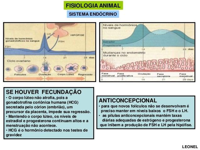 FISIOLOGIA ANIMAL SISTEMA ENDÓCRINO  SE HOUVER FECUNDAÇÃO • O corpo lúteo não atrofia, pois a gonadotrofina coriônica huma...