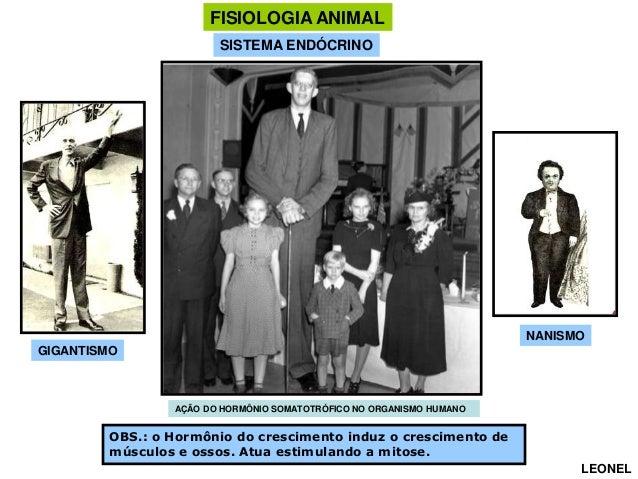 FISIOLOGIA ANIMAL SISTEMA ENDÓCRINO  NANISMO GIGANTISMO  AÇÃO DO HORMÔNIO SOMATOTRÓFICO NO ORGANISMO HUMANO  OBS.: o Hormô...