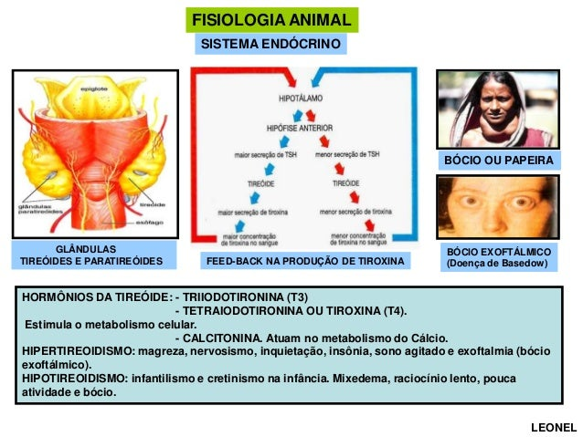 FISIOLOGIA ANIMAL SISTEMA ENDÓCRINO  BÓCIO OU PAPEIRA  GLÂNDULAS TIREÓIDES E PARATIREÓIDES  FEED-BACK NA PRODUÇÃO DE TIROX...