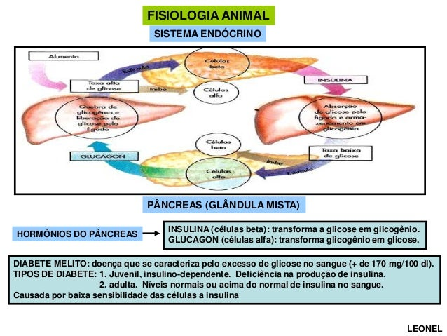 FISIOLOGIA ANIMAL SISTEMA ENDÓCRINO  PÂNCREAS (GLÂNDULA MISTA) HORMÔNIOS DO PÂNCREAS  INSULINA (células beta): transforma ...