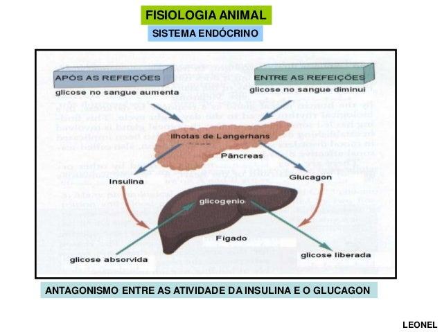 FISIOLOGIA ANIMAL SISTEMA ENDÓCRINO  ANTAGONISMO ENTRE AS ATIVIDADE DA INSULINA E O GLUCAGON  LEONEL