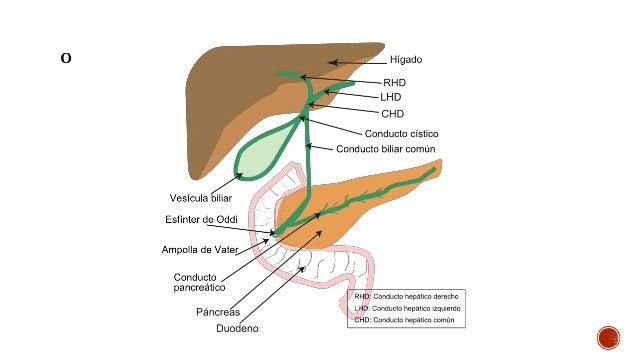 Fisiologia de bilis y via biliar