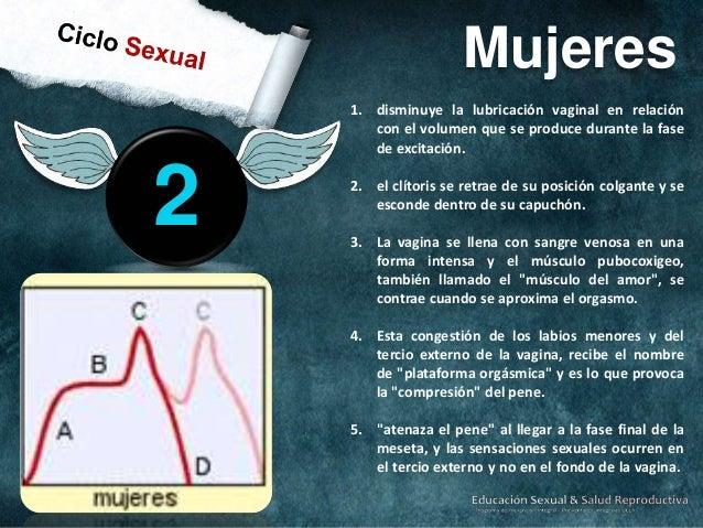 1.  2.  3 Orgasmo en Hombres  Etapa de instabilidad de la eyaculación que le impide retroceder del clímax. La uretra es se...