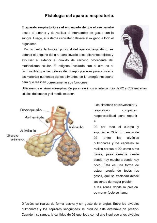 Dorable Sistema Respiratorio Anatomía Y Fisiología Colorante Libro ...
