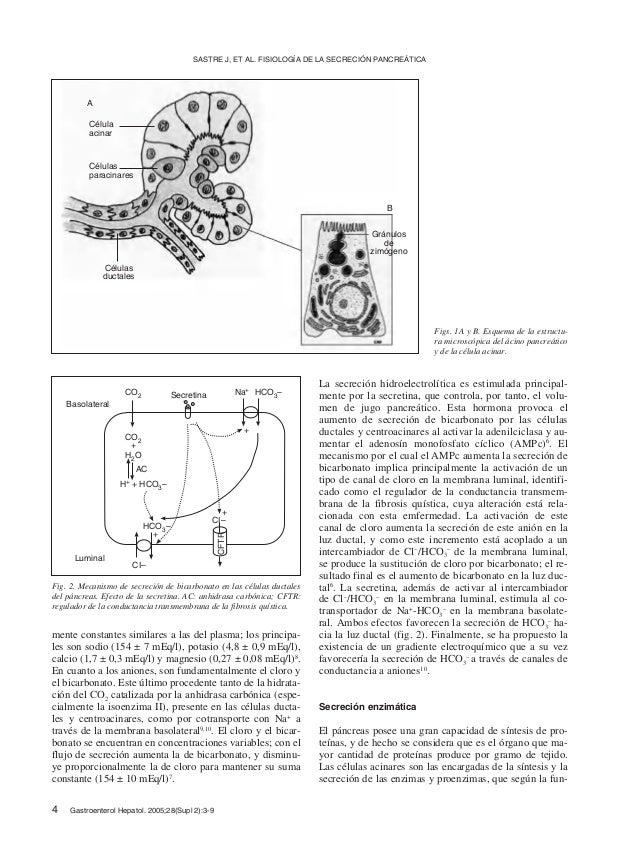 Fisiologia de la secrecion pancreatica Slide 2