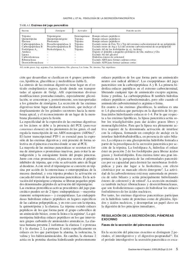 Fisiologia de la secrecion pancreatica Slide 3