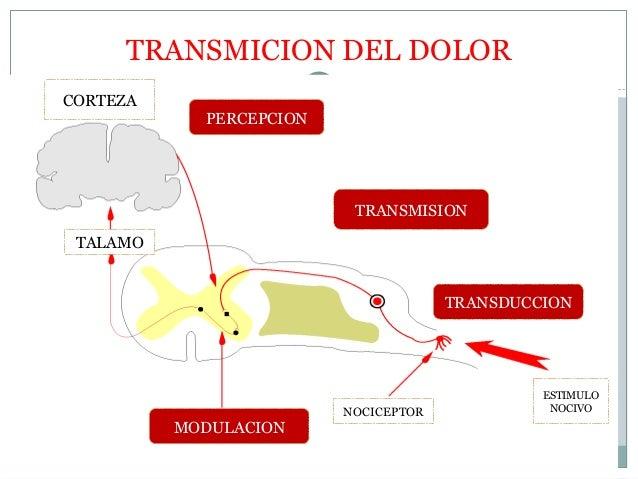 fisiologia-del-dolor-17-638.jpg?cb=1491947178